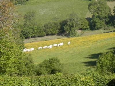 Natuur,rust,cultuur in De Morvan/Bourgogne/Frankrijk