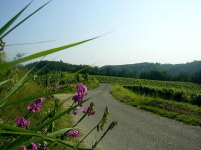 b&b Cà d Rot Cosy and informal atmosphere in the hills of Monferrato and Langhe