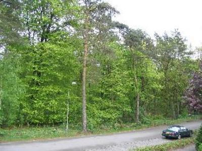 B&B Maas aan het bos