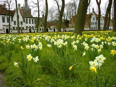 RAINBOW LODGE Charme verblijf in het natuurpark Drongengoed regio Gent - Brugge - Eeklo