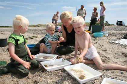 Uitwaaien langs het Limfjord in Denemarken