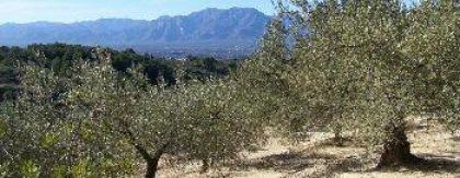 Vakantiehuisje op olijvenplantage