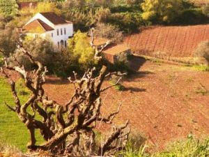 Guesthouse Quinta Laranja - Portugal